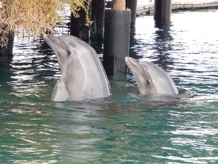 Dolphin Reef (Israel) - ProWal/WDSF-Foto
