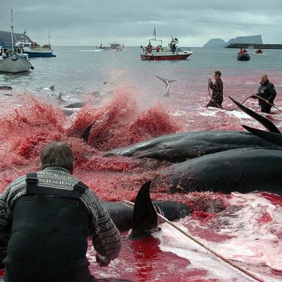 Foto: Faroe Information (facebook) with permission for WDSF