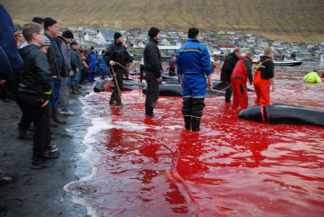 Foto: Faroe Information with permission for WDSF