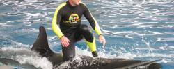 SeaWorld gibt Zucht von Orcas auf - Zoos in Nürnberg und Duisburg unter Zugzwang