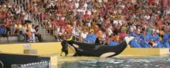 DIE WELT: Gefangenschaft treibt Delfine in den Selbstmord