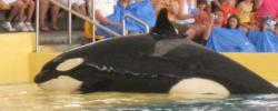 BLACKFISH - Manipulation durch Sea World?