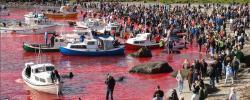 Färöer-Inseln: Tierschutzaktivisten verhaftet - Kreuzfahrtunternehmen stur