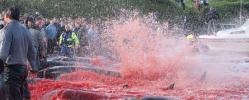 AIDA und HapagLloyd boykottieren Färöer-Inseln - TUI Cruises uneinsichtig