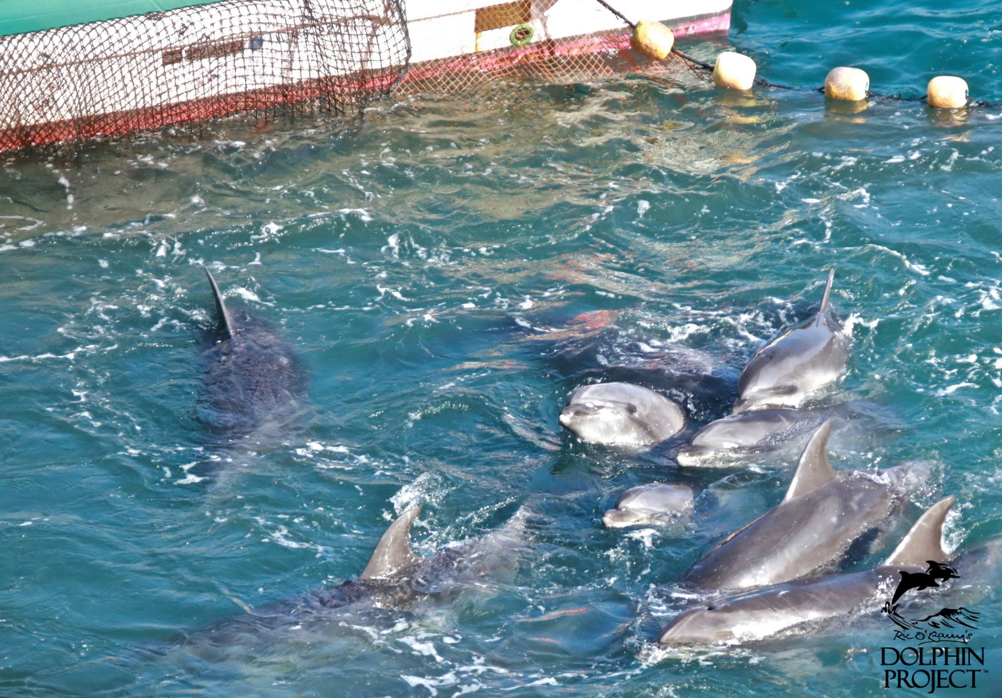Taiji/Japan 20.01.2017 - Foto: Ric O'Barry's Dolphin Project