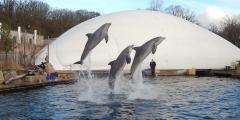 WDSF-Tierschutzorganisation kritisiert Tiergarten Nürnberg wegen geschönter Besucherzahlen und fordert Beendigung der Delfinhaltung